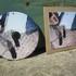 Arrow cd 3