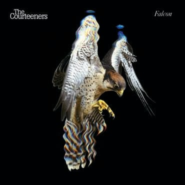 The courteeners falcon