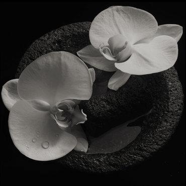 Patton  mike   jean claude vannier corpse flower