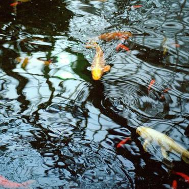 The reflecting pool jason letkiewicz