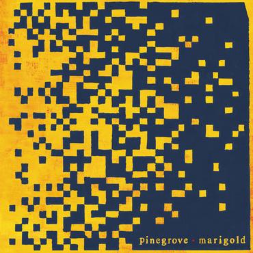 Pinegrove marigold packshot